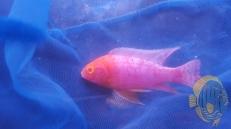 albino.eureka1